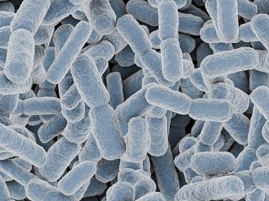 スルーラと乳酸菌生産物質